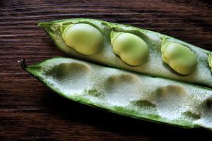 L-dopa broad beans