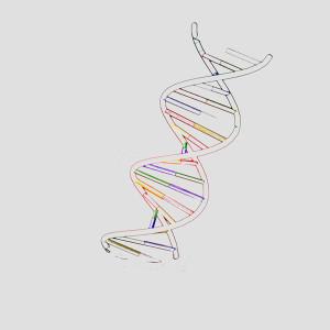 Telomeres And Telomerase Aging