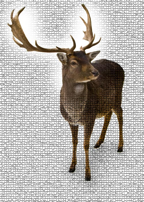 Deer Antler Velvet Extract Product